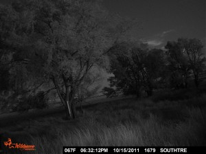 There are no animals in this pic but it is one of my favorite trail cam pics we collected in KS.