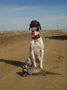 Proud boy with his rooster.